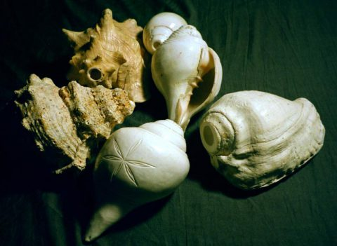 Various Conch Trumpets